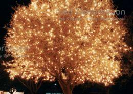 agac isik susleme buyuk 534 260x185 - Ağaç ışık süsleme